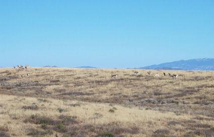 antelope-1.jpg
