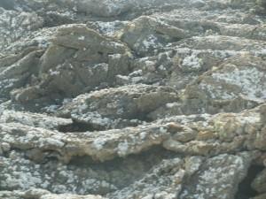 lichencoveredvolcanicrocks