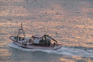 malagashrimpboat