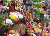 ramblasflowers