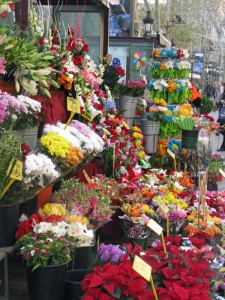 ramblasflowers