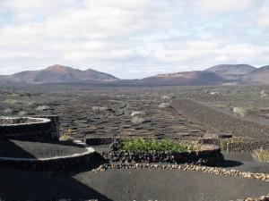 volcanicvinyard4