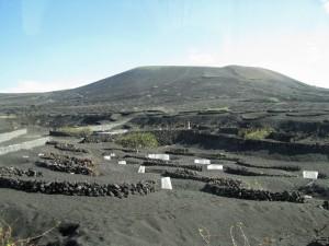 volcanicvinyard
