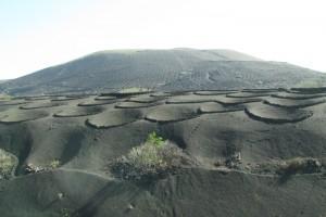 volcanicvinyard2